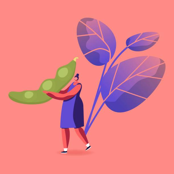 女性は巨大な新鮮な大豆ポッドを運びます。大豆植物製品健康栄養,ビーガン食品,代替タンパク質源概念大豆収穫、新鮮な野菜を食べる漫画フラットベクトルイラスト - 枝豆点のイラスト素材/クリップアート素材/マンガ素材/アイコン素材