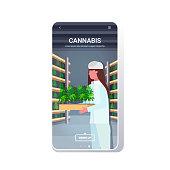 woman carrying cannabis plants industrial hemp plantation interior legal cbd marijuana concept drug consumption agribusiness smartphone screen mobile app copy space portrait vector illustration