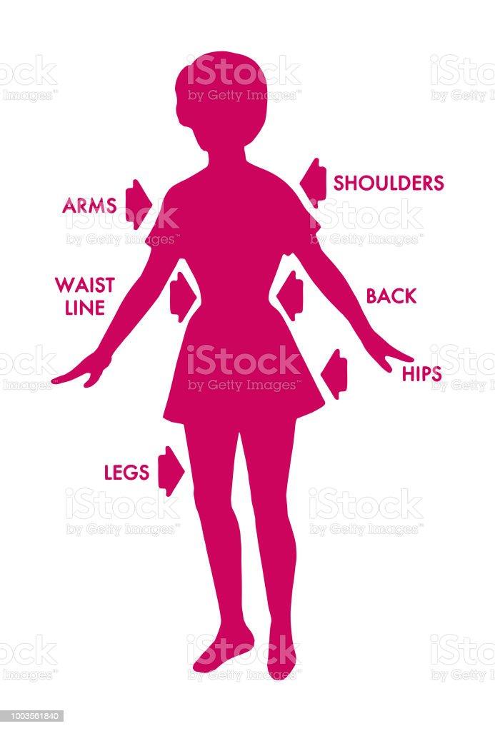 Ilustración de Diagrama De La Mujer y más banco de imágenes de ...