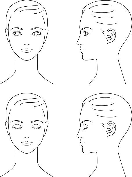 woman face. Front and profile. vector art illustration