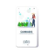 woman farmer watering cannabis industrial hemp plantation growing marijuana plant drug consumption agribusiness concept smartphone screen mobile app copy space vector illustration