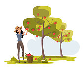 Woman gathers apples in bucket vector illustration