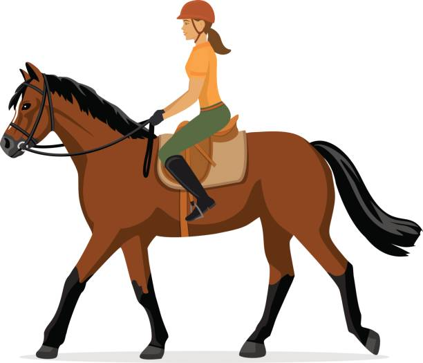 女性の乗馬。馬術スポーツ。分離ベクトル図 - 乗馬点のイラスト素材/クリップアート素材/マンガ素材/アイコン素材