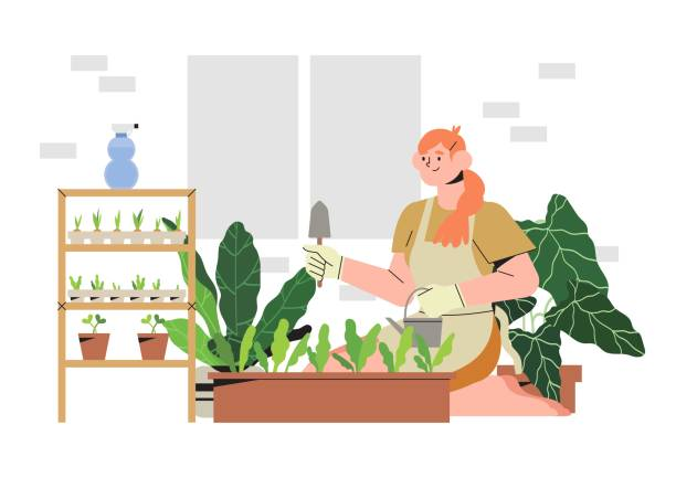 Woman on a balcony or patio growing plants or vegetables in a flowerpot, planting and watering seeds. Concept of urban home gardening or indoor vegitables farming. Seedling in a paper containers. Woman on a balcony or patio growing plants or vegetables in a flowerpot, planting and watering seeds. Concept of urban home gardening or indoor vegitables farming. Seedling in a paper containers. urban gardening stock illustrations