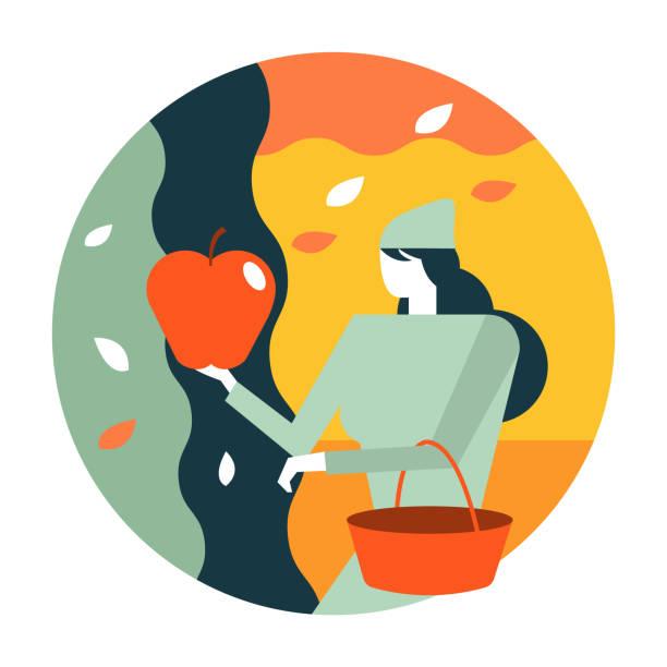 ilustrações de stock, clip art, desenhos animados e ícones de woman picking apples in the garden. - picking fruit