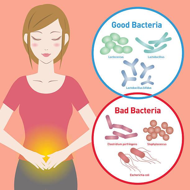 Woman silhouette and Good Bacteria and Bad Bacteria - ilustración de arte vectorial