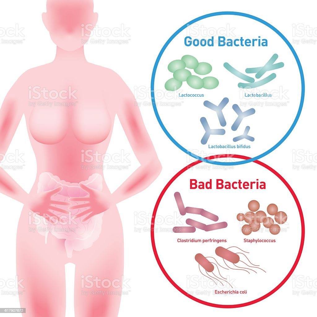 Woman silhouette and Good Bacteria and Bad Bacteria vector art illustration