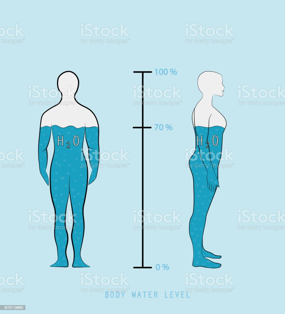 woman silhouette infographic showing water percentage level in human body vector illustration stock illustration download image now istock woman silhouette infographic showing water percentage level in human body vector illustration stock illustration download image now istock