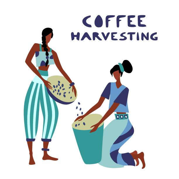 illustrazioni stock, clip art, cartoni animati e icone di tendenza di woman unidentified coffee farmer is harvesting coffee - coffee farmer
