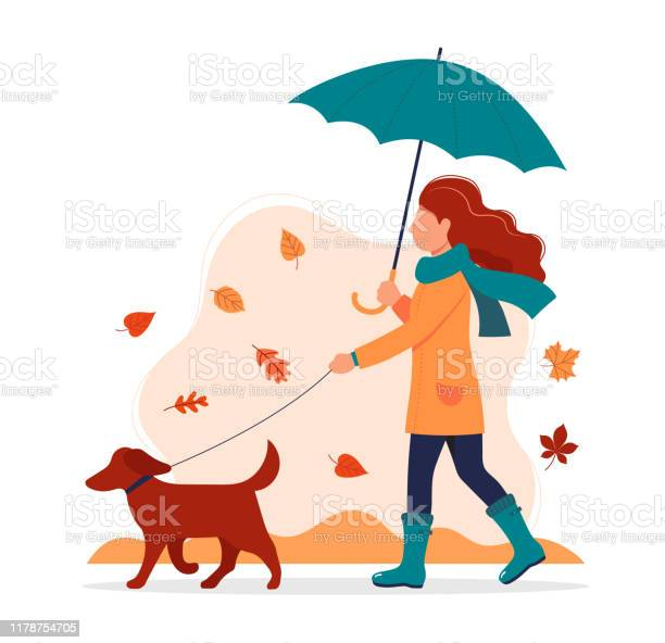 Woman walking a dog in autumn with umbrella vector illustration in vector id1178754705?b=1&k=6&m=1178754705&s=612x612&h=amayctzkruandr5gbrmoqxhq1ej7l6gmltjgfzpskbw=