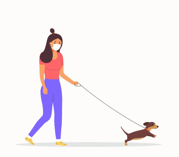 Woman  wearing face masks walking with a dogs isolated. Vector flat style illustration vector art illustration