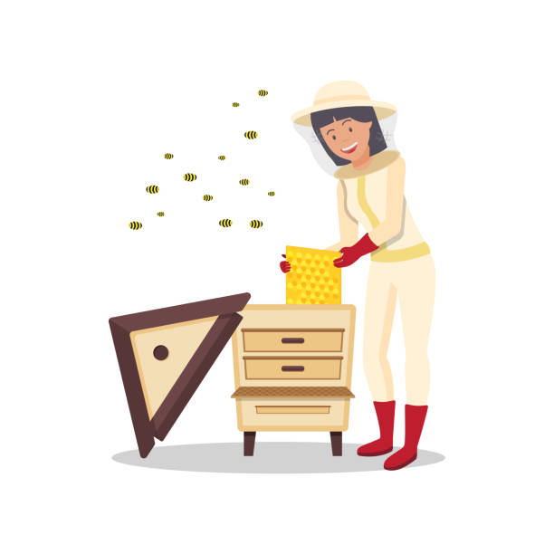 Woman with Honeycomb in Hand Stands near Beehive. Protective Suit. Woman with Honeycomb in Hand Stand near Beehive. Breed Bees. Produce Honey. Beekeeper Costume. Stand near Hive. Vector Illustration. Natural Honey. White Background. beekeeper stock illustrations