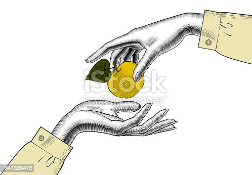 Woman's hands with an apple. Vintage engraving stylized drawing. Vector illustration