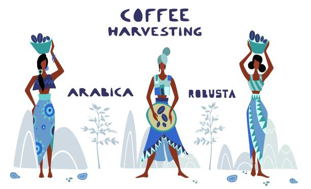 illustrazioni stock, clip art, cartoni animati e icone di tendenza di womans unidentified coffee farmer is harvesting coffee - coffee farmer