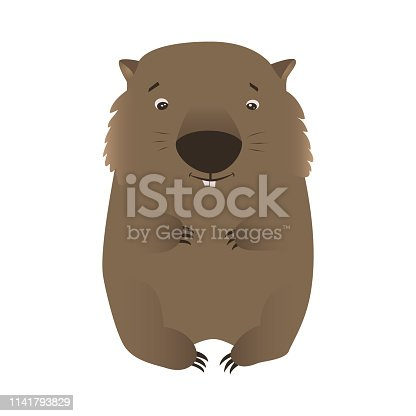 Wombat cartoon character isolated on white background. Cute native Australian animals hand drawn vector illustration