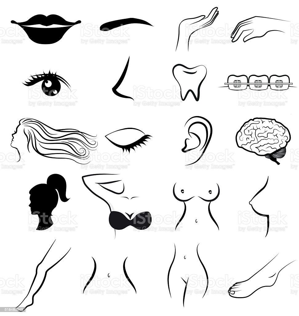 Ilustración de Mujeres Las Partes Del Cuerpo Humano Vector y más ...