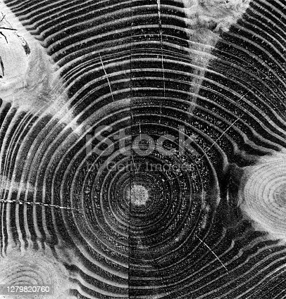 istock Wood grain with visible knots - wooden beam cut across - monochromatic vector illustration with lines and gradients and dirty - central arrangement of uneven thick and thin  lines - abstract background pattern with textured 3D effect 1279820760