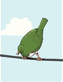 Wood Pigeon on a Wire