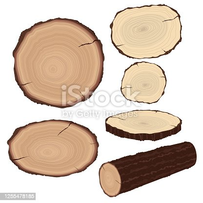 illustration of wood slices cross section wood trunk