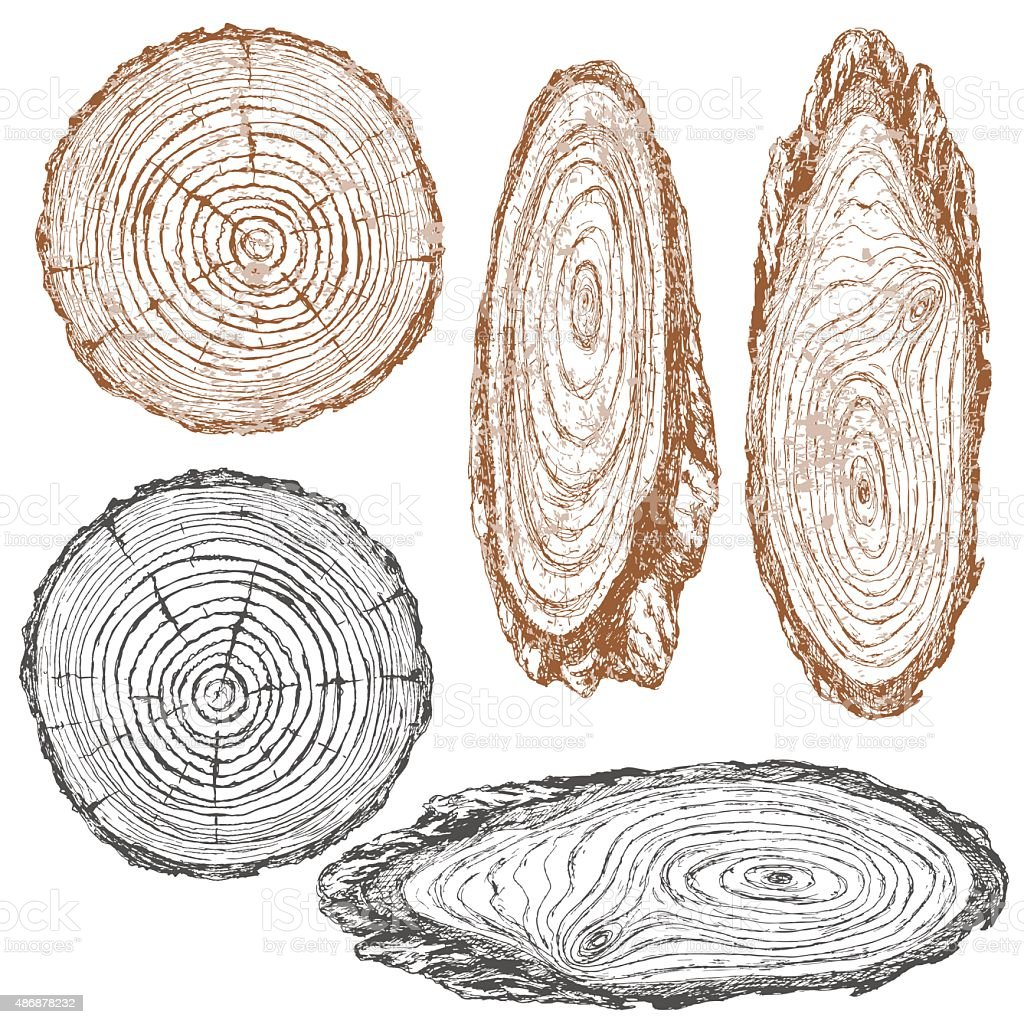 Wood texture of trunk tree sketch vector art illustration