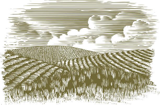 гравюра на дереве фермы поля - граттаж stock illustrations