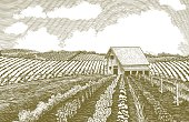 This sepia-toned vintage-looking woodcut-style vector illustration shows a farmer's garden with rows of vegetables in the foreground and an old barn in the background. Large puffy clouds help create a sense of scale. This illustration was created with scratch board technique.