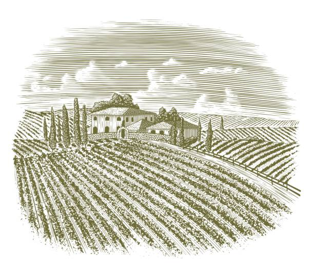 bildbanksillustrationer, clip art samt tecknat material och ikoner med träsnitt vintage italienska vingård - vineyard