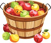 Vector wooden basket with red, yellow and green apples isolated on a white background.