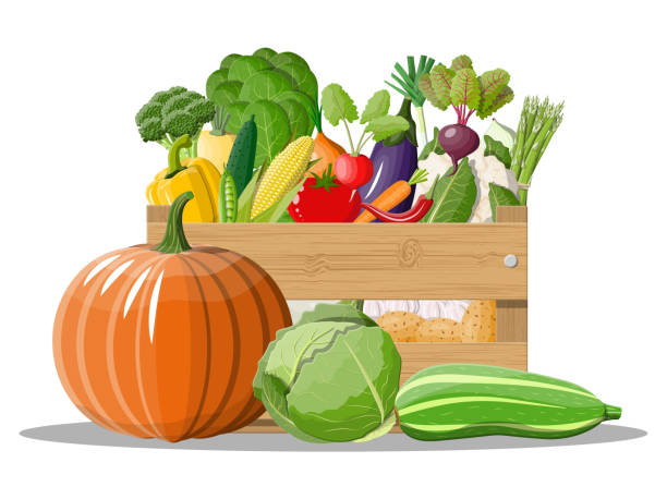 Wooden box full of vegetables. Wooden box full of vegetables. Onion, eggplant, cabbage, pepper, pumpkin, cucumber, tomato carrot and other vegetables. Organic healthy food. Vegetarian nutrition. Vector illustration in flat style squash vegetable stock illustrations