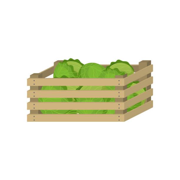 stockillustraties, clipart, cartoons en iconen met houten doos van landbouwbedrijf groene kool voor huisopslag - kruisbloemenfamilie