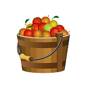 Wooden bucket with apples. Vector illustration isolated on white