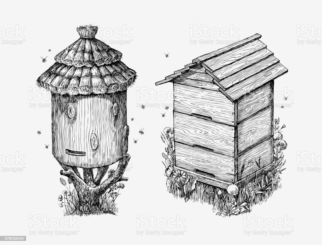 Wooden hives. Hand drawn sketch beekeeping, honey, bees. Vector illustration vector art illustration