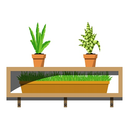 Wooden shelves with potted plants in ceramics pots. Aloe and ypung palm flovers in the pot and green grass in container on the shelves. Interior design element for room decoration.