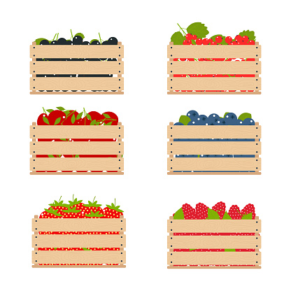 Wooden vector boxes with fruits collected from the farm.
