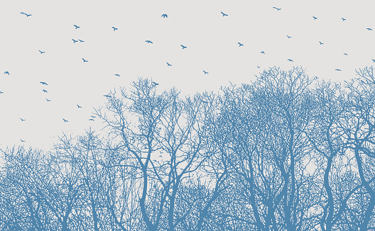 Woodland and flock of birds