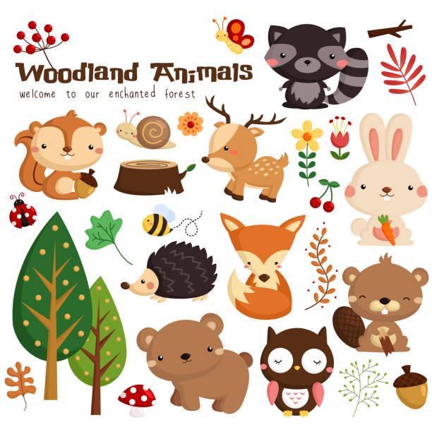 Woodland Animal many woodland animal in a single image woodland stock illustrations