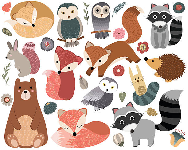 woodland animals and forest design elements - baby animals stock illustrations
