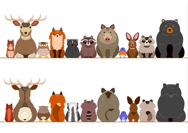 conjunto de fronteira animais da floresta - ilustração de arte em vetor