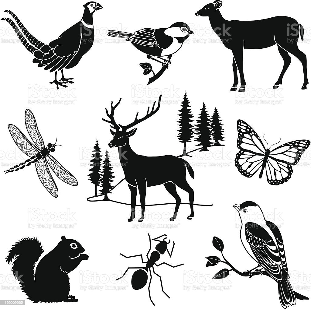 woodland animals royalty-free stock vector art