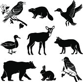 Vector illustrations of various North American animals found in the woods.