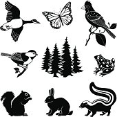 Vector illustrations of various animals found in North American woods.