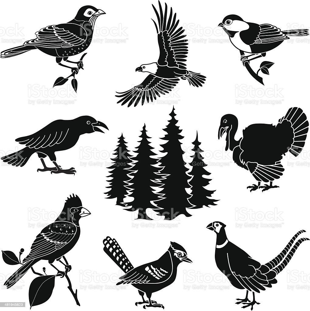 woodland birds royalty-free stock vector art