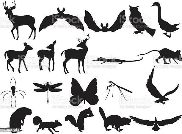 Woodland creatures silhouettes vector id165599744?b=1&k=6&m=165599744&s=612x612&h=vy1n7yfy1xf6kbwc9u xlsumxjyu3klz5mfaog7lego=