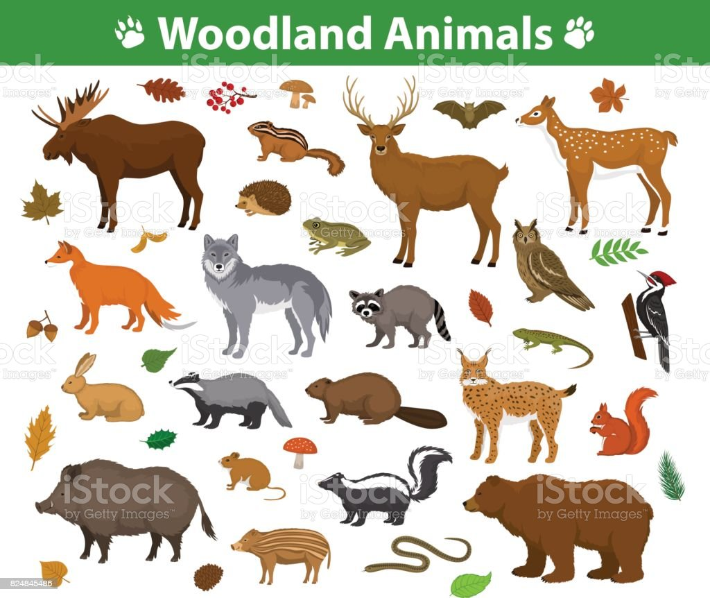 Woodland forest animals  collection including deer, bear, owl, wild boar, lynx, squirrel, woodpecker, badger, beaver, skunk, hedgehog - illustrazione arte vettoriale