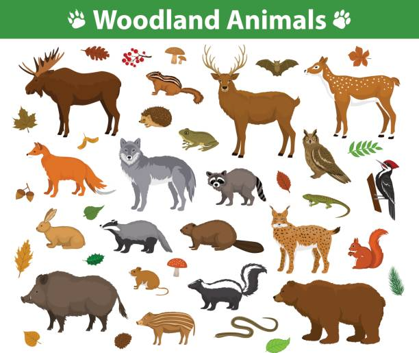woodland forest animals  collection including deer, bear, owl, wild boar, lynx, squirrel, woodpecker, badger, beaver, skunk, hedgehog - reptiles stock illustrations