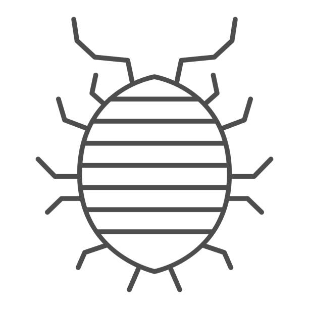 Woodlouse thin line icon, bugs concept, Roll up bug sign on white background, Sowbug icon in outline style for mobile concept and web design. Vector graphics. Woodlouse thin line icon, bugs concept, Roll up bug sign on white background, Sowbug icon in outline style for mobile concept and web design. Vector graphics arthropod stock illustrations