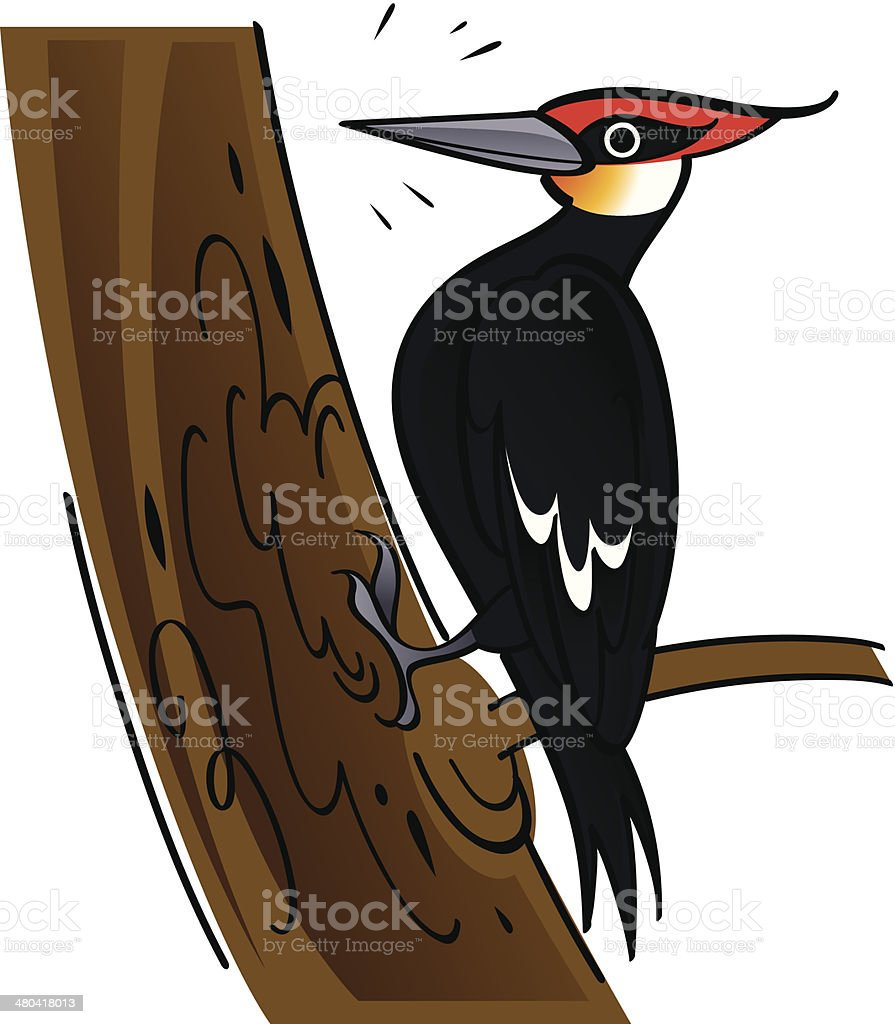 royalty free woodpecker clip art vector images illustrations istock rh istockphoto com woodpecker clip art free woodpecker clipart free