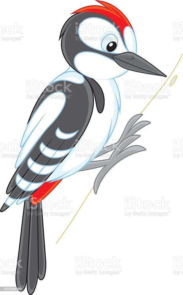 royalty free clip art of pecker clip art vector images rh istockphoto com downy woodpecker clipart cute woodpecker clipart