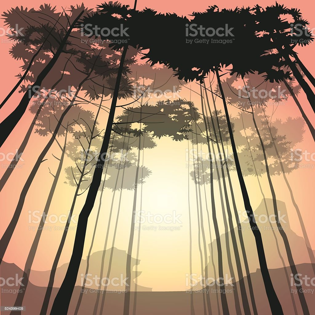 Woods at sunrise vector art illustration