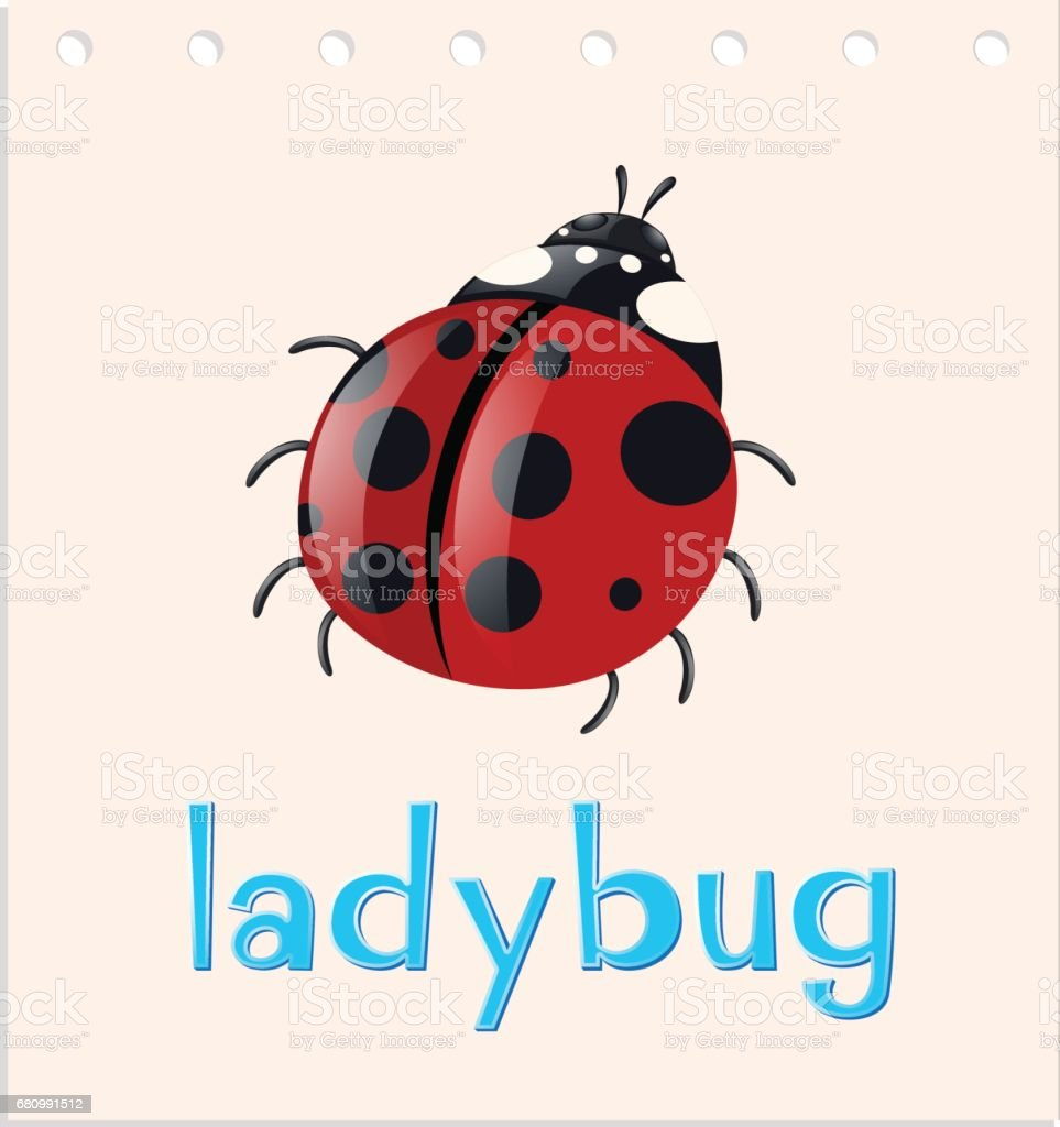 Word card with ladybug insect royalty-free word card with ladybug insect stock vector art & more images of animal